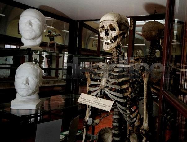 skeleton_001