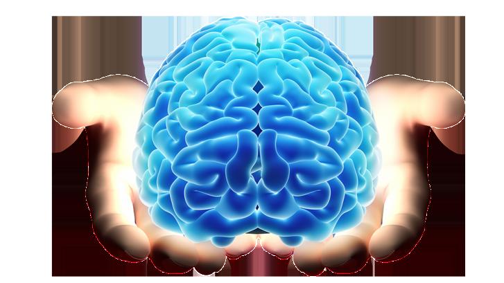 brain-727x409