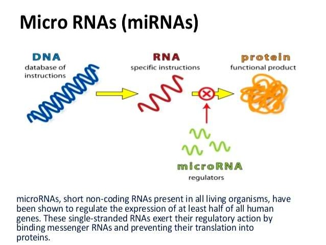 insilico-genomics-approaches-for-the-characterization-of-abiotic-stress-responsive-microrna-3-638