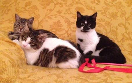 Giovanna lives with three beautiful cats