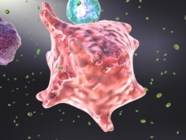 cytokine-picture