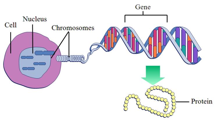 genegraphic